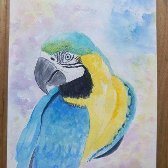Blauwvleugel Ara