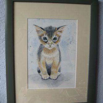 Kitten Bruin/Zwart