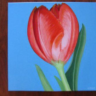 Tulp op blauw