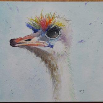Kleurige Struisvogel