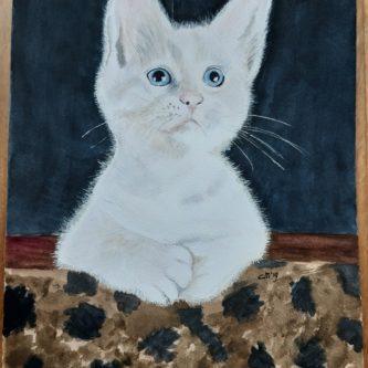 Witte Kitten